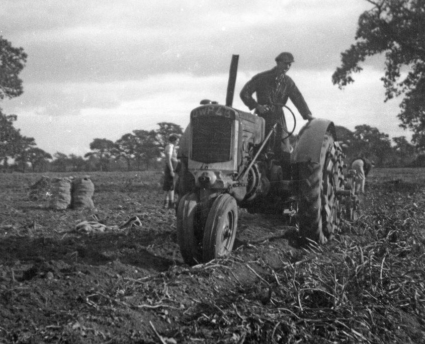 harvesting potatoes newlands 2