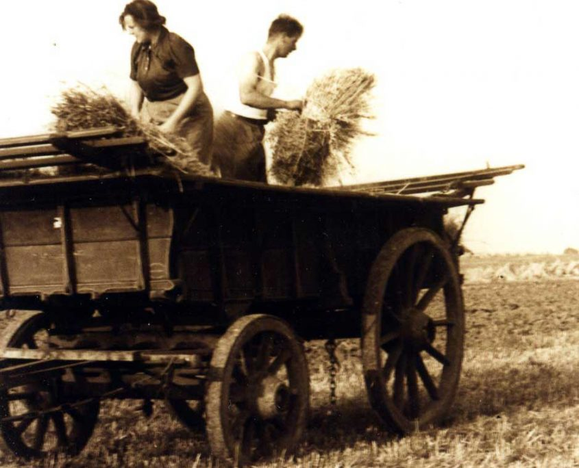 hj and ed wilson harvest during wwii