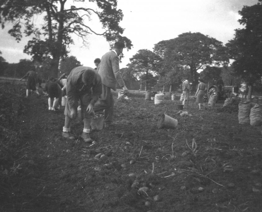 picking potatoes newlands 1940s